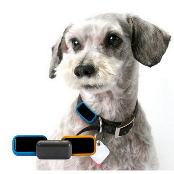 Mini Traceur GPS Étanche pour Chien ou Chat